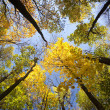 Autumn forest / bright colors of leaves / sunlight — Stock Photo #7556834