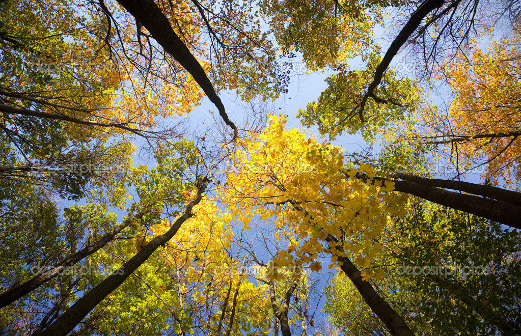 Фотообои Autumn forest / bright colors of leaves / sunlight
