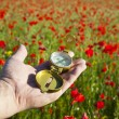 Compass in Hand / Discovery / Beautiful Day / Red Poppies in N — Stock Photo #7595638