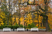 Set of benches in the park. — Stock Photo