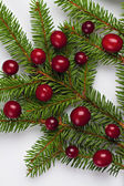 Cranberries on a Christmas tree branch. — Stock Photo