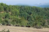 Umbra Forest. Puglia. Italy. — Stock Photo