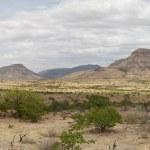 Panorama of the Kaokoland desert — Stock Photo