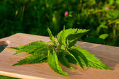 Nettle on a board — Stock Photo