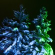 Night Fir-tree — Stock Photo