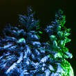 Night Fir-tree — Stock Photo #7319478