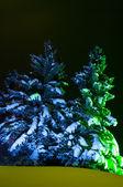 Night Fir-tree — Stock Photo