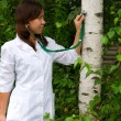Tree Doctor — Stock Photo #7350956