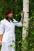 Tree Doctor — Stock Photo