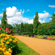 Stock Photo: Garden of flowers