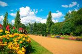 Garden of flowers — Stock Photo