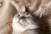 Pretty funny cat napping and luxuriating pleasure — Stock Photo
