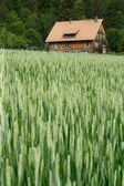 House in the wheat field — Stock Photo
