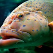Big tropical fish - Stock Photo