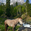 Horse in the Himalayas - Stock Photo