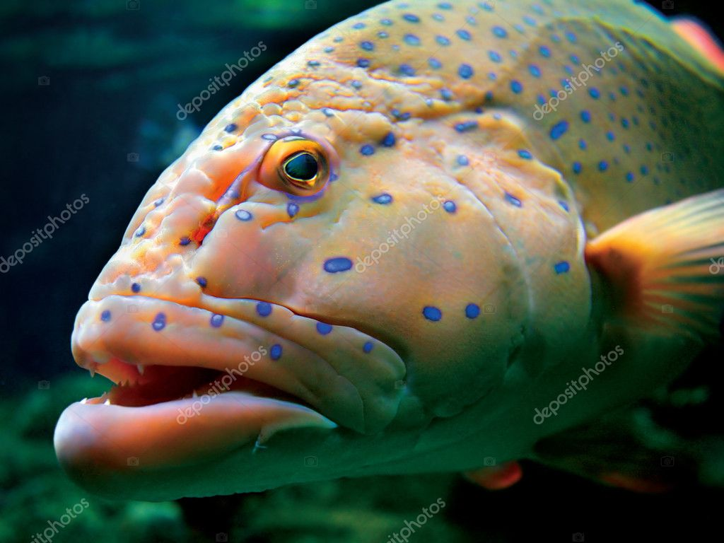 Big tropical fish stock photo 7378202 for Large aquarium fish