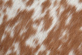 Cowhide brown — Stock Photo