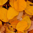 Autumn leaves — Stock Photo