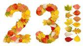 Numbers 2 and 3 made of autumn leaves — Stock Photo