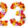 图库照片: Numbers 2 and 3 made of various flowers