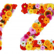 Foto Stock: Characters Y and Z made of various flowers