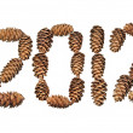 Fur-tree cones — Stock Photo