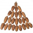 Stock Photo: Small cones