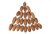 Small cones — Stock Photo