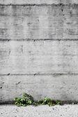 Concrete and small plants — Stock Photo