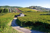 Small farmhouse in the middle of vineyards — Stock Photo