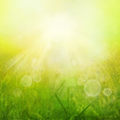 Spring or summer heat abstract nature background — Stock Photo