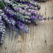 Fresh lavender - Stock Photo