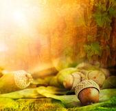Herfst ontwerp — Stockfoto