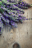 Verse lavendel — Stockfoto