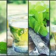 Mint tea collage — Stock Photo