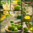 Olive oil collage - Stock Photo