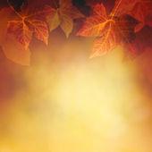Foglia d'autunno — Foto Stock