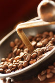Coffe beans in the grinder — Stock Photo