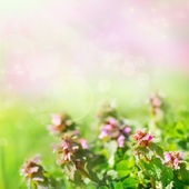 Spring background with flowers — Stock Photo