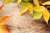 Autumn forest background — Stock Photo