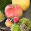 Forest fruit — Stock Photo
