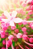 Beautiful abstract floral background — Stock Photo