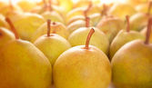 Row of ripe pears — Stock Photo