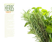 Herbs with copyspace — Stock Photo