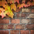 Stock Photo: Ivy over brick wall
