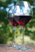 Two wine glasses in the garden — Stock Photo