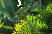 Banana and palm trees plantations — Stock Photo