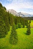 Bosque verde en los alpes suizos — Foto de Stock