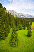 Green forest in the Swiss Alps — Stock Photo