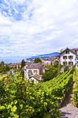 Vineyards in Montreux Town, Switzerland — Stok fotoğraf